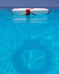 Every pool should have a life preserver nearby.