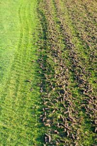Core aerators cut plugs of soil like these out of the ground.