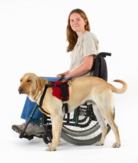Service dogs help disabled people perform various simple tasks.