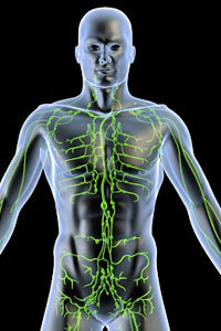 The lymph system is the body's drainage system.