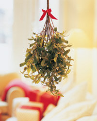 Mistletoe is a parasitic plant that grows on trees.