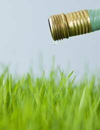 Longer growth means less watering because the roots absorb moisture more efficiently.