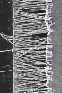 This is a microscopic look at one of the processes used to grow ZnO nanowires. The nanowires are in the middle, growing from a chromium electrode on the left toward a gold electrode on the right.