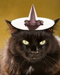 This kitty is all ready for Halloween with a black witch's hat and fur to match.