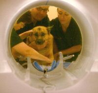 A dog undergoes an MRI scan to check for cancer.