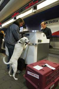 A traveler and her dog check in for their flight at New York's LaGuardia Airport.