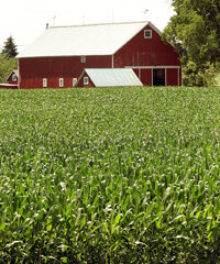 Farm buildings stand near a corn field in Lincolnshire, Ill. Real property like this contribute to the size of a property tax bill.