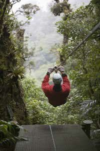 Ecotourism is one of the economic motivations for replanting the rainforests.