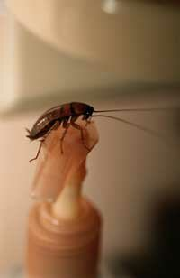 Oh the irony. Soap is no roach repellent. See more insect pictures.