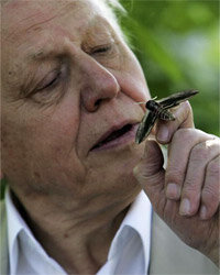 Do you suppose that moth is spying on Sir David Attenborough?