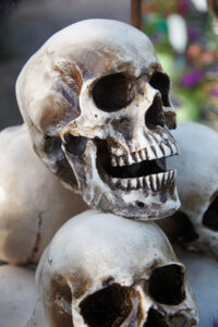 Following removal of the skin and scalp, the Shuar discard the skulls of the victims.