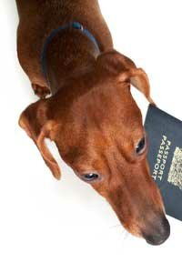 If you're traveling with your pet overseas, you'll probably need a pet passport.
