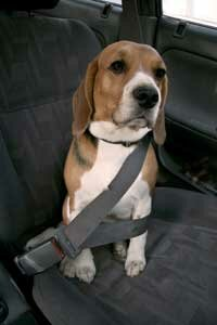 It's cute a image, but a pet seat belt is a smarter, safer idea than this.