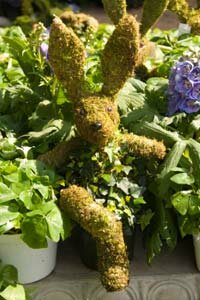 A topiary bunny made of trailing plants and sphagnum moss.