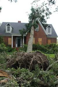 Trees can withstand only a limited amount of storm-force winds before toppling. See more pictures of trees.