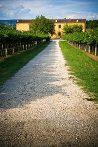 Veneto, one of Italy's most notable wine regions, is made up of seven provinces. See more wine pictures. 