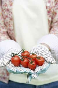 The price per pound for growing your own tomatoes is around 25 cents, compared to $1.77 at the store.