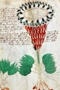 The (possibly) botanical illustrations in the manuscript have been studied at length for similarities to known plants.