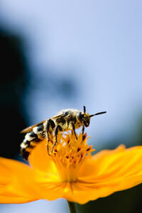 Flowers and wasps share a mutually beneficial relationship.