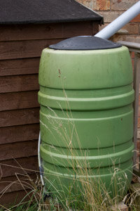In many areas, you can buy rain barrels to collect rainwater for lawn and garden use.