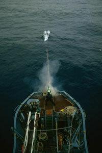 A Japanese crew member shoots a harpoon at a whale in the Antarctic during a scientific research mission.