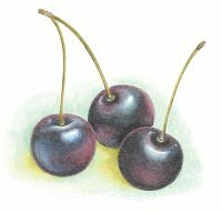 Black cherry is a large part of Cabernet Sauvignon's classic taste.