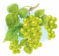 Chardonnay is considered the world's most popular varietal.