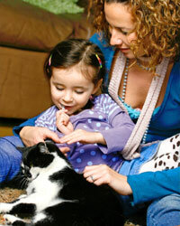 Show your young child how to pet a cat gently, and praise both cat and kid for good behavior during playtime.