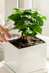 You may be able to use greywater from a dehumidifier to water plants.