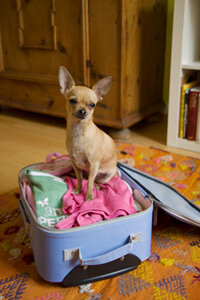 Make sure that your little friend can accompany you on vacation before you pack your suitcase. See more pet pictures.
