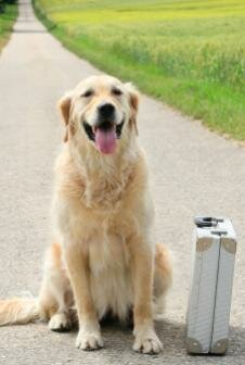 Pets can travel amazing distances to get back to their owners. See more pet pictures.