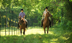 Even beginners can enjoy an easy horseback ride around California's scenic vineyards.
