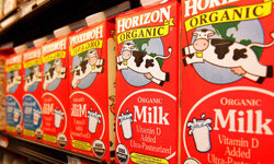 Organic milk is produced by cows that have had organic diets and are not injected with antibiotics.