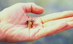 A lot of kids are fascinated when a hermit crab changes its shell.