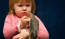 Owning a small bird and cleaning its cage can teach a child responsibility.