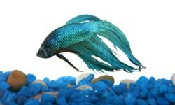 Decorating a fish bowl is almost as fun as watching your fish.