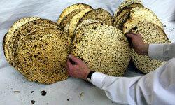 Freshly baked matzah