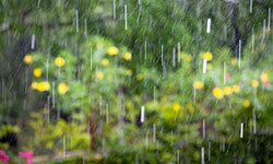 A rain garden collects runoff from your roof to support plants that thrive in wet environments.