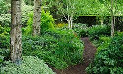 You can even build a path through your woodland garden.