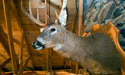Want to show off your prey? Decorate your man cave to look like a hunting lodge.