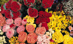 It's almost impossible to pick a bouquet -- there are so many gorgeous options! See more annual flower pictures.