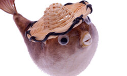 Do you really need to keep that stuffed, hat-wearing puffer fish souvenir?