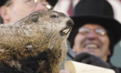 Who needs weather satellites? We've got a woodchuck!
