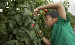 Students at Lethbridge Primary savor the nutritional benefits of organic produce.