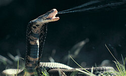 Not everyone has a Mozambique Spitting Cobra in his or her backyard, but it's likely that some other type of venomous animal lives there.