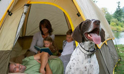 Your dog might enjoy a camping trip.
