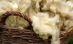 Ancient Greeks and Romans are believed to have used the oil from sheep's wool to moisturize their skin.