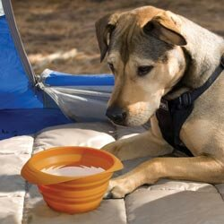 These travel water and food bowls collapse as flat a plate for easy transport.
