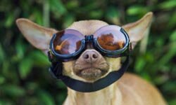 Just like humans, our furry friends' eyes need protection from the sun and windblown debris.