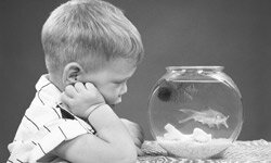If you're lonely without your pet, the Soho Grand will loan you a goldfish.